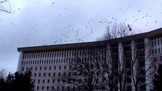 Parlamentul Republicii Moldova e asaltat de ciori