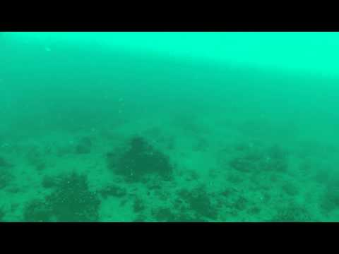 Anna Maria Island Fishing - Go Pro on the bottom - Mangrove snapper, grouper (Raw Footage)