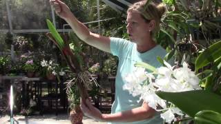 Cattleya Orchid Tips with Barb and Gary Murza