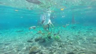Travel Pulau Klaten Jawa Tengah - Edwin Tour And Travel