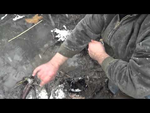 Beaver Trapping with footholds and conibears using Blind Sets