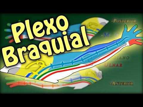 Plexo braquial / Brachial plexus