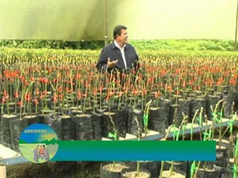Cultivo y comercialización del aguacate en clima cálido - Excelencia Empresarial Ganadería
