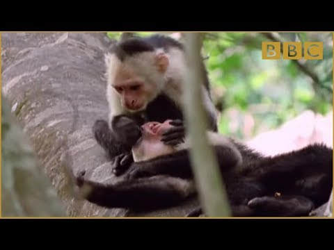 Funny Talking Animals – Walk On The Wild Side – Episode Three Preview – BBC One