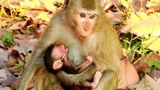 My Drop tear down to see newborn till weakness  Why Duchess not give milk her newborn till like that