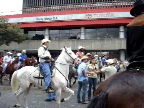 Criollo horses in Costa Rica Video