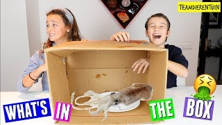 WHAT\'S IN THE BOX CHALLENGE! | TEAM DIERENTUIN