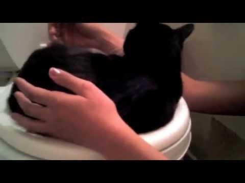 do cats pee where they sleep