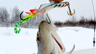 Рыбалка на балансир. Открытие сезона. Ноябрь 2016.