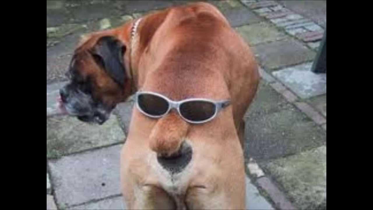 video de chien drole et mignon - YouTube