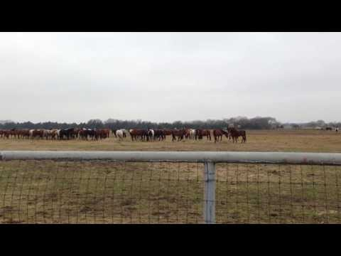 Why Horses Should Not be Fed Together - Horses Being Horses & Eating Together - It's A Miracle