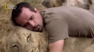 وثائقى باللغة العربية # الصداقة مع الأسد الأبيض  عالم الحيوانات المفترسة/ ناشيونال جيوغرفيك