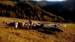 Dziewieć Sił Karpackiej Przyrody. Karpaty Łączą