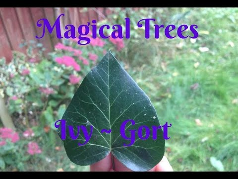 Magical Trees -  Ivy