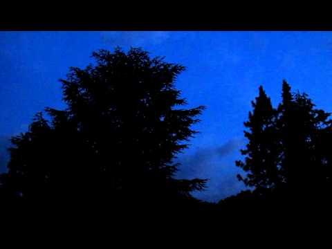 Vogelgesang in der Nacht