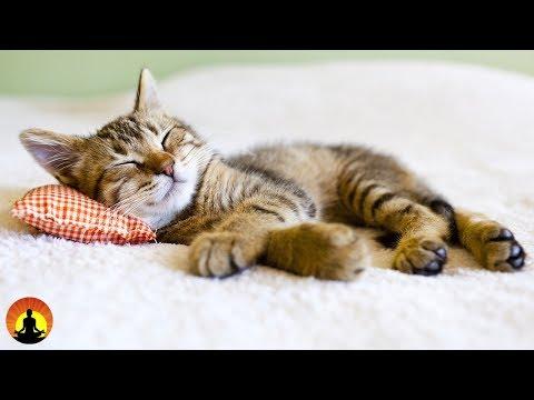8 Hour Super Sleep Music: Relaxing Music, Meditation Music, Sleeping Music, Relaxation Music, �