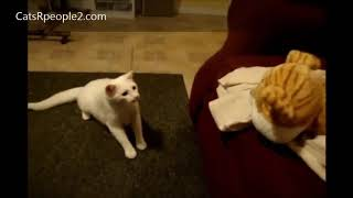 Funny Animals Videos Compilation! Cute Cats & Dogs - Try Not To Laugh Animals Videos #4