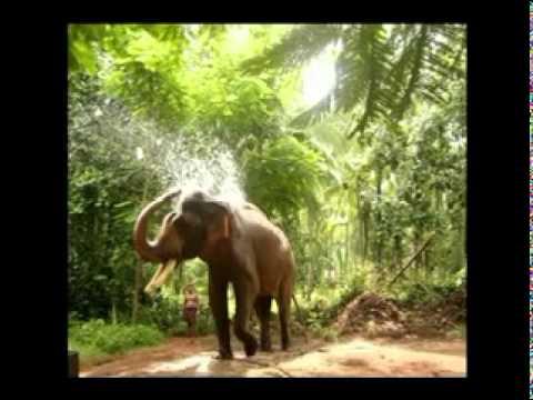 Mandarakavile - Vinod Kodiyankad Ctly (9578979326) video