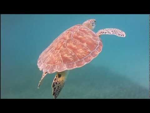 Snorkeling Culebra Puerto Rico - Filmed with Intova Sport Pro HD