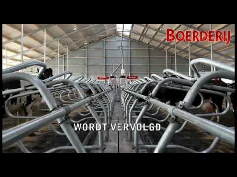 Ecovloer in de nieuwe melkveestal van Familie Oudshoorn – Wijdenes – Nederland