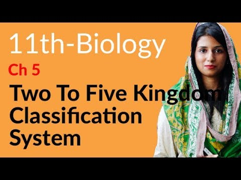 What is the five-kingdom system?