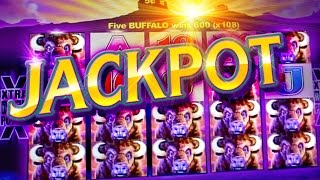 HUGE BUFFALO JACKPOT !!!  5c Aristocrat Video Slots - San Manuel Buffalo