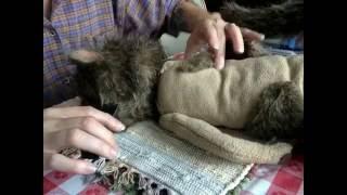 Puppet ER: Ulysses the Squirrel