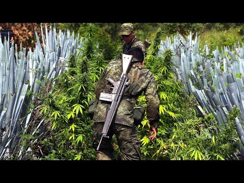 Legal Marijuana Killing Business for Mexican Drug Cartels