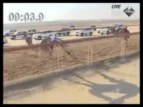 Abu-Dhabi - Sports (camel races)
