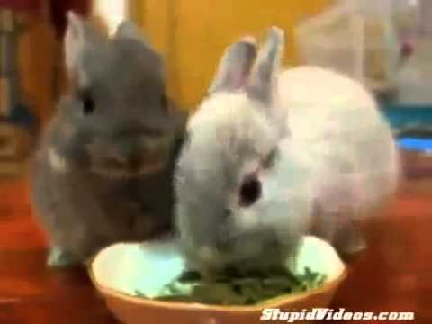 Baby Bunnies Eat Funny animals, comedy, dogs, cat fails ~ Best Funny Animals 2014 by Imran doll