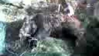 lov na diva svinja vo globocica struga 2
