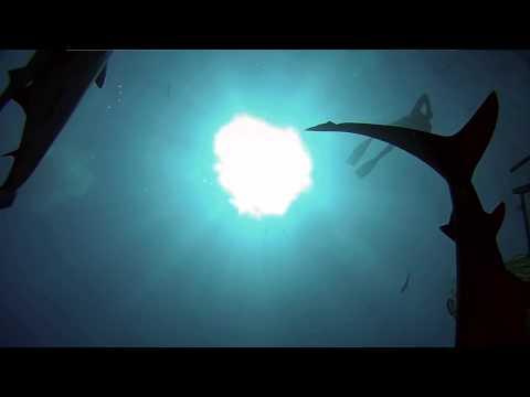 невероятный подводный мир
