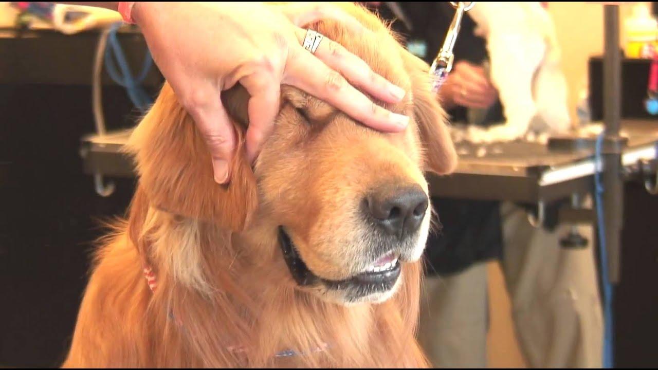 Shaggy Dog Grooming