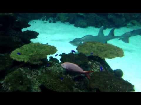 Las Vegas Mandalay Bay Shark Reef Aquarium