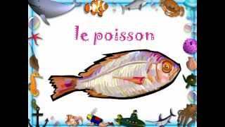 LEARN FRENCH creatures de la mer