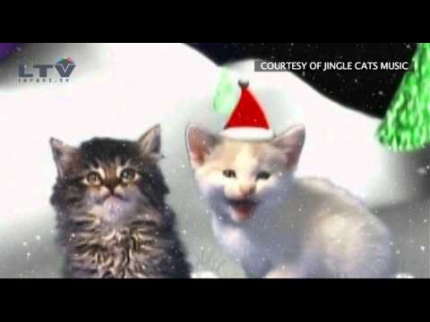 Jingle Cats - Cats Meowing Christmas Song - Silent Night