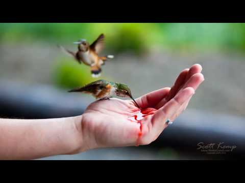 SalteryLodge - Hand feeding Hummingbirds