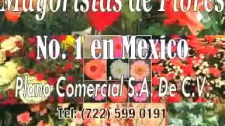 Mayoristas de Flores