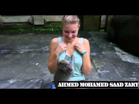 Monkey Touching Breast Girl video