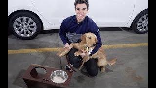 Puppy Jim Dun's Food Bowl Stand