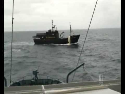Sea Shepherd Finds Whaling Fleet 2013 - ABC NEWS AUSTRALIA