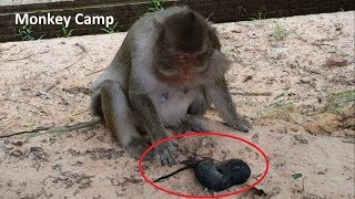 RIP for baby monkey, Pity Mum still look after her miscarriage, 2nd day that baby monkey gone away