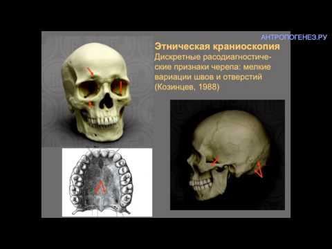 Классификация человеческих рас: старые факты в свете новых открытий