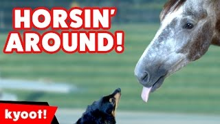 The Funniest Horse & Pony Videos of 2016 Weekly Compilation   Kyoot Animals