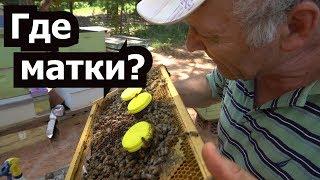 пчеловодство для начинающих - Система вывода дополнительных маток - Где матки ?