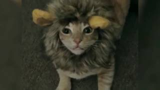 Very Cute cats in Funny Costumes!