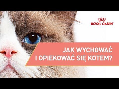 Jak Wychować I Opiekować Się Kotem? || ROYAL CANIN || Porady Dla Właściciela Kota