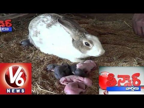 Rabbit, Pillalu - In Srikakulam Dist - Teenmaar News