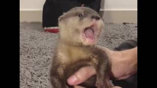 Baby otter 6