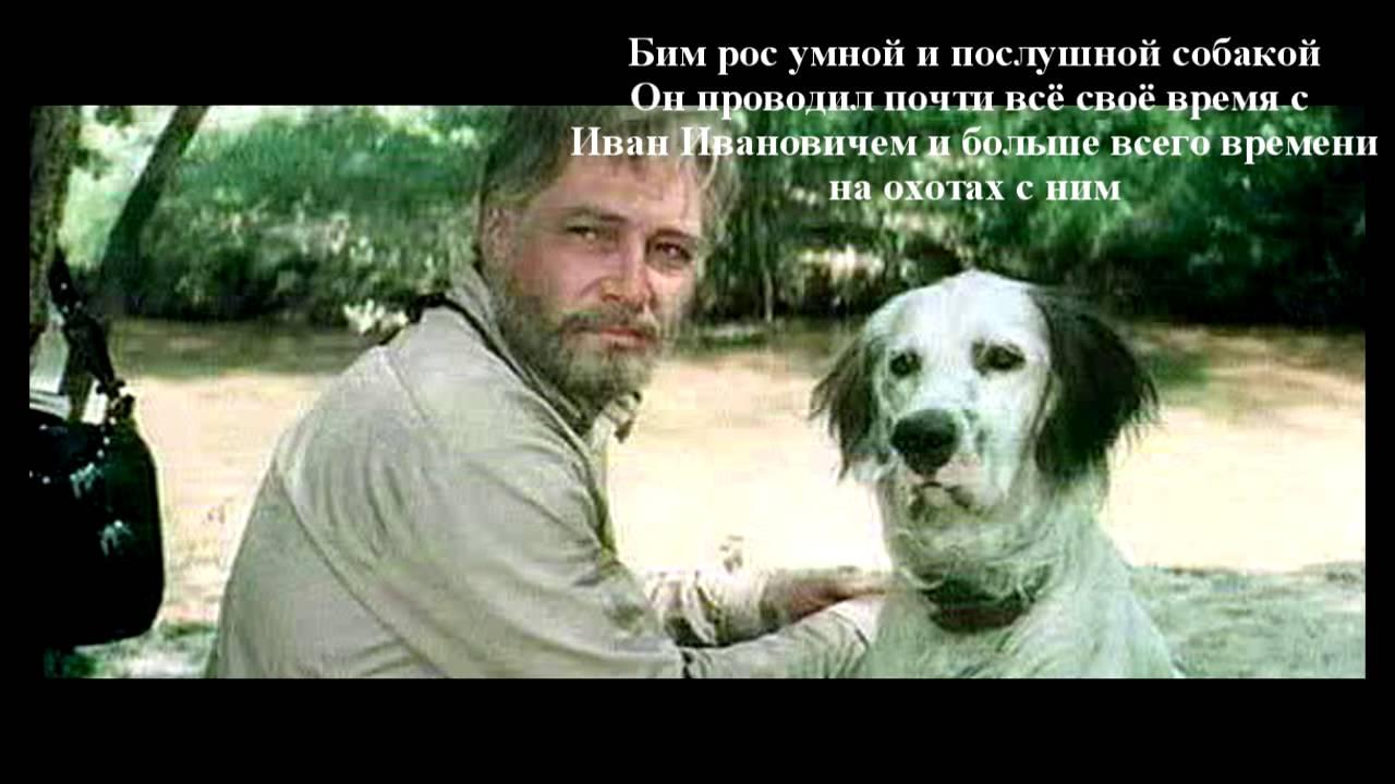 год собаки фильм: